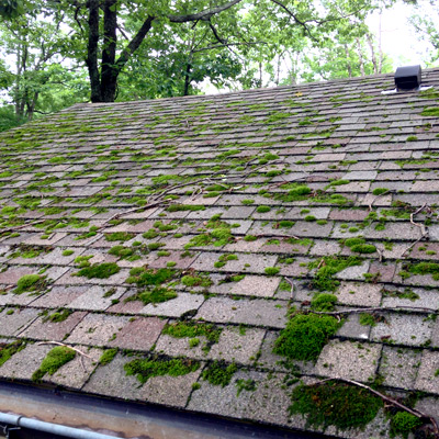 Moss Roof Removal